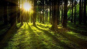 Comisia-Europeana-stabileste-obiective-mai-ambitioase-in-materie-de-clima