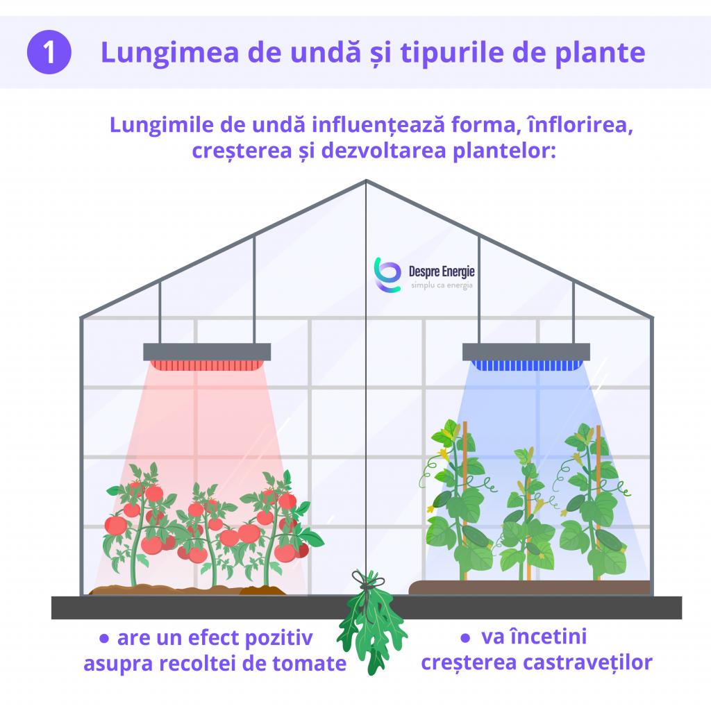 lungimea-de-unda-si-tipurile-de-plante